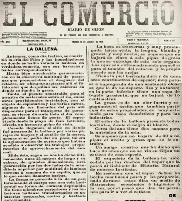 1895 ballena en gijon  el comercio