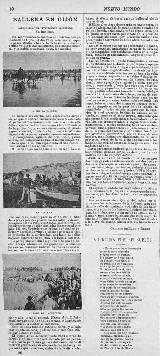 1895 ballena en gijon nuevo mundo