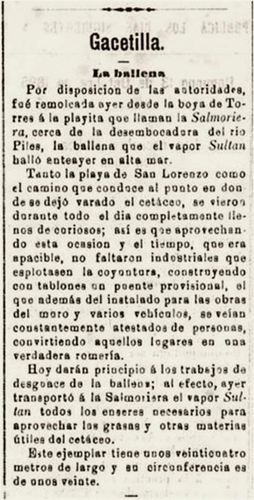 Ballena El comercio 13-10-1895